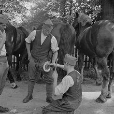 Mobilmachung 1939: Soldaten beschlagen ein Pferd. (RDB)