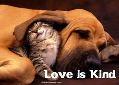 love is kind  1 Corinthians 13:4a  New International Version (NIV)  Love is patient, love is kind.