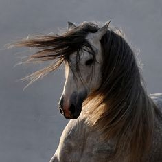 Horse Photo:  This Photo was uploaded by LoneLizard2. Find other Horse pictures and photos or upload your own with Photobucket free image and video hosti...