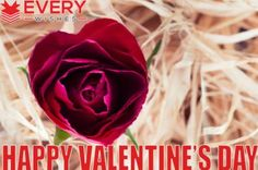 Send Valentine's Day Wishes to your lovers. Check out latest Valentine's day wishes cards, Images, Quotes, Status & much more. Message Quotes, Message Card, Birthday Message To Myself, Valentines Day Wishes, Wishes Messages, Birthday Messages, Prayers, Rose, Flowers