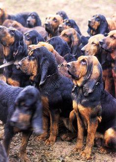 scent hound | Tumblr