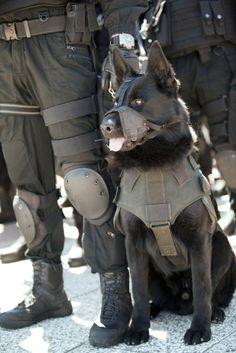 Da sempre i cani sono dei fedeli amici dell'uomo e dei lavoratori estremamente utili. L'ubbidienza, la capacià di reazione, l'intel