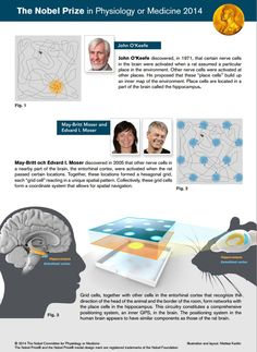 2014 Nobel Prize in Physiology or Medicine Awarded to John O'Keefe, May-Britt Moser, Edvard Moser