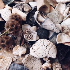 Seashell and flotsam nature collection | Wildthorne