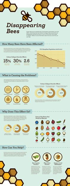 Disappearing Bees  #Infographic #Bees