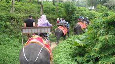 Riding elephants - Phuket, Thailand