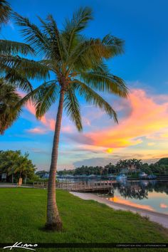 Coconut tree along the waterway in Juno Park durign sunset at the boat docks. HDR image created using Photomatix Pro and Topaz software.