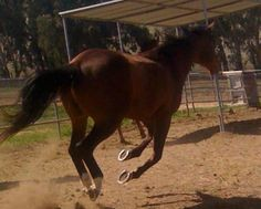 Bowie Airing It Out @ The Heart Of The Hirse Therapy Ranch!!!