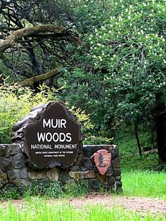 Muir woods.Marin county