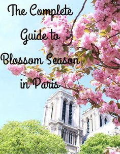 Spring in Paris with this comprehensive guide to all the best places for cherry blossoms- even places the Parisians don't know! | The Complete Guide to Blossom Season in Paris | Paris, France