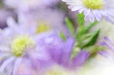 Summer Poetry Photograph by Jenny Rainbow Art Prints For Home, Fine Art Prints, Fine Art Photography, Poetry, Rainbow, Wall Art, Canvas, Purple, Summer