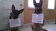 Dog Shame   MY NAME IS BAILEY… WHEN I'M BORED I LIKE TO PEE ON...