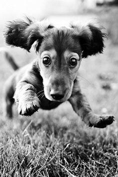 Suprise cute dog. @Katie Hrubec Schmeltzer Schmeltzer Masteller