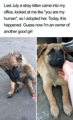 33 Cute Dog Posts That Will Have You Grinning All Day - Hundebabys Animal Jokes, Funny Animal Memes, Dog Memes, Funny Dogs, Cute Little Animals, Cute Funny Animals, Funny Cute, Love Dogs, Cute Stories
