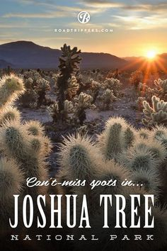 In our opinion, Joshua Tree has them all beat as the quirkiest and most eccentric park in the system. Get ready to do a lot of exploring, because we& rounded up the coolest of park& best-kept secrets. California Camping, California Dreamin', Indian Wells California, Best Places To Camp, Places To See, Camping Places, Behind Blue Eyes, Skyline, Scenic Photography