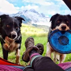 "« ""We've got miles of unrestricted fetch space and you want to nap?!"" #campingwithdogs @laurenadowney »"