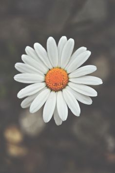 Focusing in on the center of a flower is a beautiful way to connect to your soul.