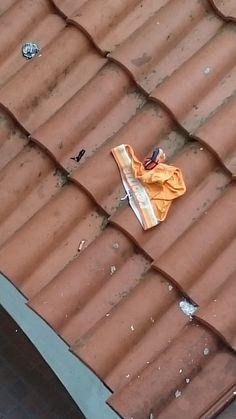 Wind blown someone's undies - 1