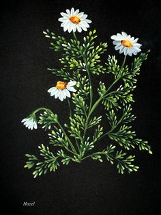 One Stroke Daisies .Painted by Hazel Lynn.