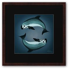 Framed Fine Art Print  • Vaquita Porpoise art by wildlife artist Amber Marine ••• Learn about the critically endangered vaquita and how you can help at http://www.nmmf.org/VaquitaCPR.html •••