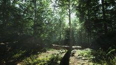 Unreal 4 Lighting Study: Forest Day, Alexander Dracott on ArtStation at https://www.artstation.com/artwork/unreal-4-lighting-study-forest-day