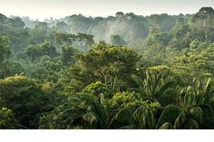 The aerial of rainforest at Macritchie Reservior, SingaporeImage provided by Getty Images. Forest Photography, Matte Painting, Nassau, Planet Earth, Art Direction, Fine Art America, Flora, Tropical, Artwork