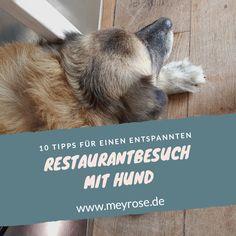 10 Tipps für einen Restaurantbesuch mit Hund – so ist es für alle entspannt Restaurant, Tips, Restaurants, Supper Club, Dining Room