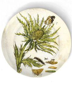 1600's botanical artwork VIII - reproduced on 10 inch Melamine Plate