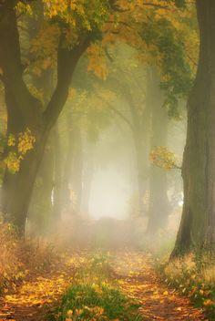 Paweł Bożek - Autumn