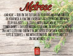 oil for bruises Melrose Essential Oil is an amazing blend of essential oils that is excellent fo. Melrose Essential Oil is an amazing blend of essential oils that is excellent for cleansing and healing scrapes, cuts, wounds and insect bites. Melrose Essential Oil, Essential Oil Scents, Essential Oil Diffuser Blends, Essential Oil Uses, Doterra Essential Oils, Young Living Oils, Young Living Essential Oils, Easential Oils, Organic Gardening