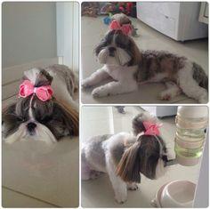 Na dúvida, ponha um laço! Pois nossos amores de 4 patas tem que ser tratados como filhos.  @prieleokretzer #lululacos #luludogs #lacos #lacoslindos #bow #hairbow #hairaccessory #acessoriodecabelo #instadog #namoda #handmade #feitoamao #enfeitesdecabelo #pets #instapets #petlove #ilovemydog #petstagram #cute #doglover