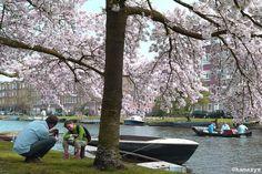 Idílico - Amsterdam NL