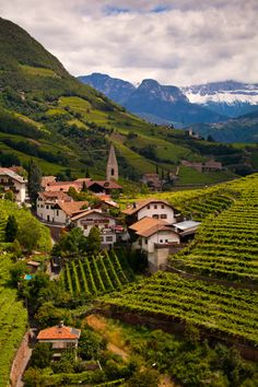 Ritten Vineyards, Italy