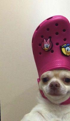 Cute Animal Memes, Animal Jokes, Cute Funny Animals, Cute Baby Animals, Funny Dogs, Cute Dogs, Funny Babies, Funny Kitties, Funny Horses