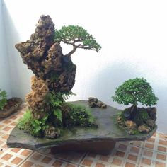 Bonsai Ficus, Succulent Bonsai, Indoor Bonsai, Terrarium Plants, Bonsai Plants, Bonsai Garden, Plantas Bonsai, Bonsai Tree Types, Indoor Water Garden