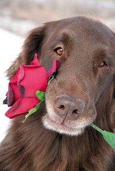 I love dogs. I wish humans were more like dogs. Love My Dog, Beautiful Dogs, Animals Beautiful, Cute Animals, Sweet Dogs, Cute Dogs, San Bernardo, Alberto Giacometti, Charles Darwin