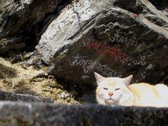 Sie hat die Ruhe weg - im Chacri Meditationszentrum kein Wunder. Foto: Doris Bhutan, Meditation, Animals, Photos, Animaux, Animal, Animales, Zen, Animais