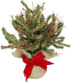 """burlap trees 