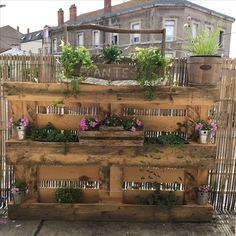 Jardin dans palette sur balcon