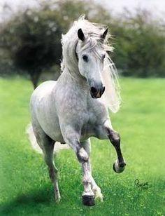 Lindo cavalo!