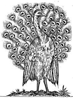 #Paon, volatile reconnaissable à son cri particulier, recherche crayons à mine coulorée pour redonner des #couleurs à son beau plumage #DIY #coloriage #numelyo #Opendata