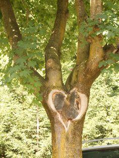 Love is...in a tree!
