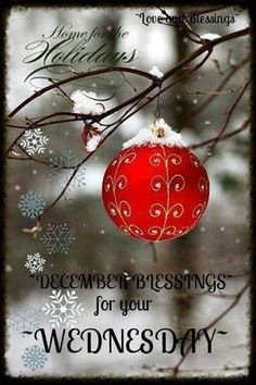 Add a few Red baubles to a garden tree for a little Christmas spirit. Merry Little Christmas, Noel Christmas, Winter Christmas, All Things Christmas, Christmas Bulbs, Christmas Crafts, Christmas Decorations, Xmas, Thanksgiving Holiday