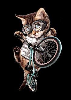 "Beautiful ""BMX CAT"" metal poster created by Adam Lawless. Cat Breeds With Pictures, Arte Digital Fantasy, Cat Diseases, Cat Shedding, Cat Posters, Cat Wallpaper, Cute Cartoon Wallpapers, Cat Drawing, Beautiful Cats"