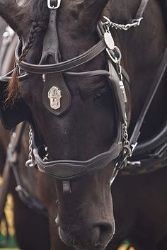 Percherons horses, Where will your Percherons horses sleep? If you wish to crate. All The Pretty Horses, Beautiful Horses, Animals Beautiful, Horse And Buggy, Horse Love, Black Horses, Wild Horses, Zebras, Disney Horses