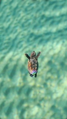 If you like turtles, baby turtles or tortoise than check out these funny turtle videos and cute turtle videos. Baby Animals Pictures, Cute Animal Photos, Cute Pictures, Pictures Of Turtles, Happy Pictures, Baby Sea Turtles, Cute Turtles, Tier Wallpaper, Animal Wallpaper
