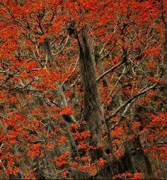 Bosque de Bucares, Estado Monagas