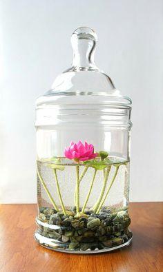 Oooooh cute little water lilies in a water terrarium <3