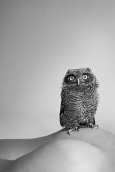 Ryan Mcginley. Especially this one with the confused owl. 'Owl' 2010