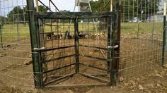 1000 Images About Hog Traps On Pinterest Property Tax Deer Feeders And Hunting Blinds